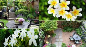 A Basic Guide to Landscaping for Most Gardens