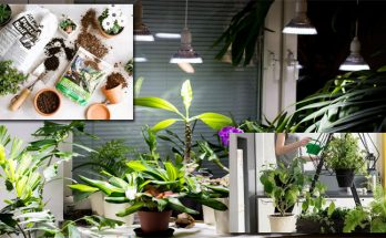 3 Very simple Measures to Establishing an Indoor Garden