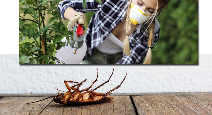 Don't Try This At Home: Do-It-Yourself Pest Control Methods Can Result In Deadly Consequences