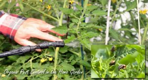 Organic Pest Control in the Home Garden