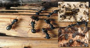 Do not Let Carpenter Ants Take a Bite Out of Home's Worth