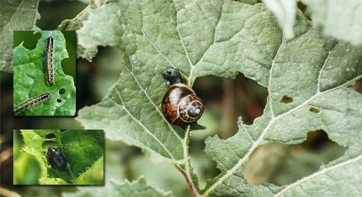Garden Information - Dealing With Garden Pests