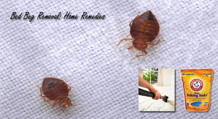 Bed Bug Removal: Home Remedies