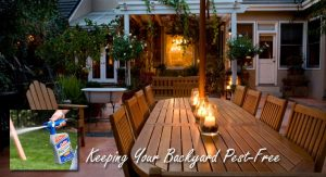 Keeping Your Backyard Pest-Free Through Outdoor Insect Control