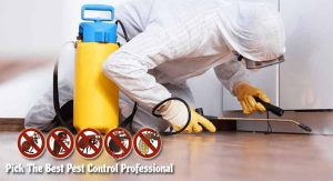 How To Pick The Best Pest Control Professional