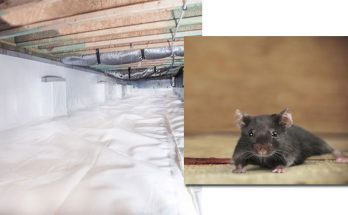 How to Keep Pests Out of Your Crawl Space