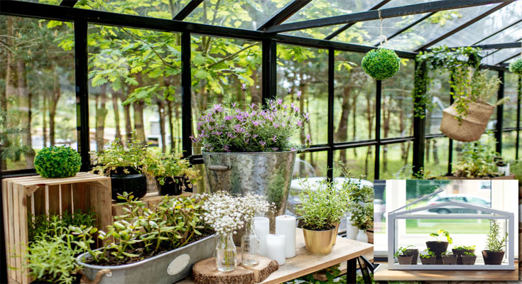 An Indoor Greenhouse Creates a Controlled Developing Atmosphere