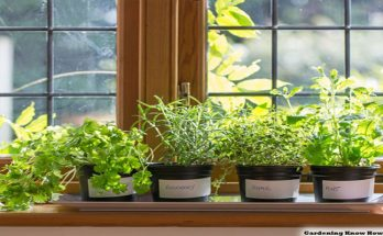 10 Greatest Herb Plants Excellent for Indoor Gardening