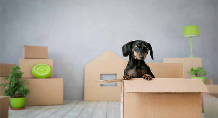 4 Riveting Motives Why Removal Providers Minimize the Pressure of Moving Home