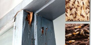 Residential Pest Control: 10 Signs You Have a Termite Problem